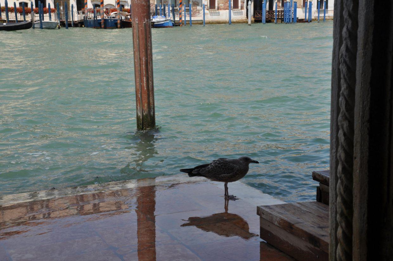 Acqua Alta oder Hochwasser in Venedig am Canal Grande